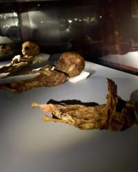 Anadolu'nun mumyaları