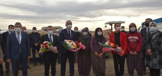 Bakan Yardımcısı Işıkgece, Kastamonu'da sarımsak tohumu dağıtım programına katıldı: