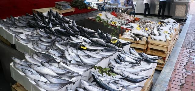 Balıkçılar av sezonundan memnun