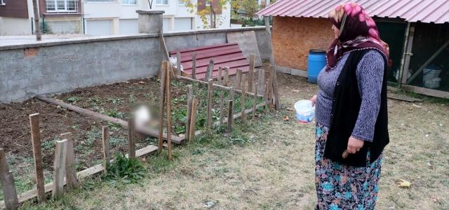 Bolu'da hayvana şiddet iddiası