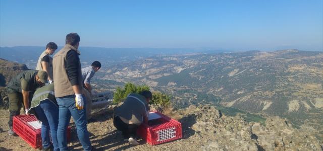 Bolu'da kınalı keklikler doğaya bırakıldı