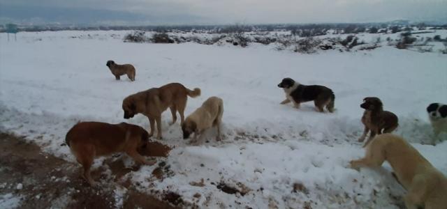 Bolu'da Kızılay ekipleri, sokak hayvanlarına yem bıraktı