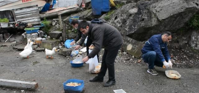Ereğli'de ördeklerin bakımını belediye üstlendi
