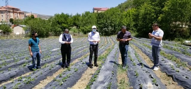 Giresunlu çiftçi siyez buğdayı ve Çamoluk şeker kuru fasulyesine yoğun ilgi gösteriyor