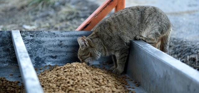 Kastamonu Belediyesi sokak hayvanlarını unutmadı