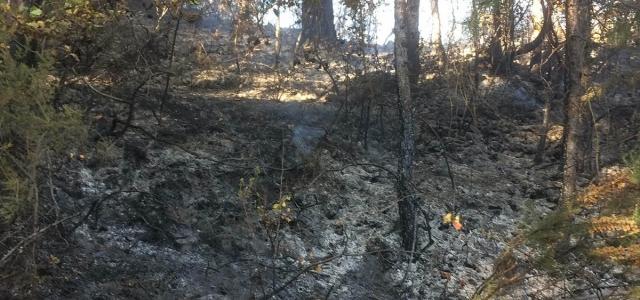 Kastamonu'da orman ve anız yangınları