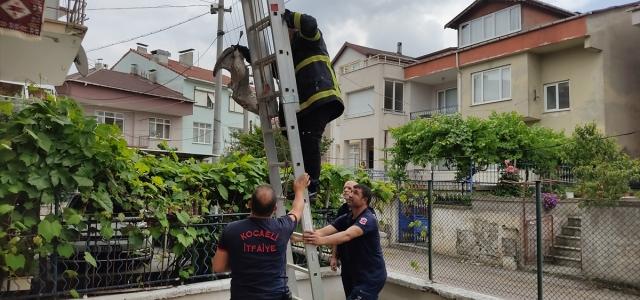 Kocaeli'de ayağı çatıya sıkışan martıyı itfaiye ekipleri kurtardı