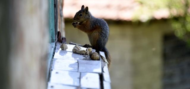 """""""Küçük sevimli misafirleri"""" evinin penceresinde ağırlıyor"""