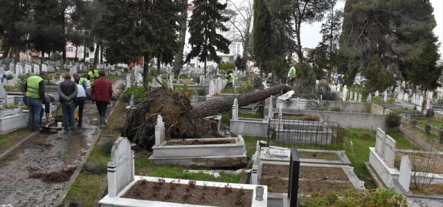 Ordu'da fırtına nedeniyle sökülen ağaçlar mezarlara zarar verdi