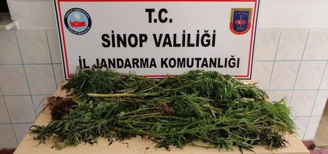 Sinop'ta Hint keneviri operasyonu