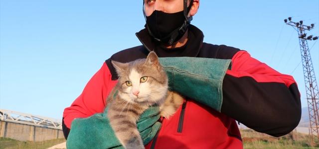 Telefon direğinde mahsur kalan kediyi itfaiye ekipleri kurtardı