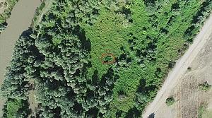 Amasya'da polis ekipleri drone yardımıyla ormanlık alanda 558 kök Hint keneviri ele geçirdi