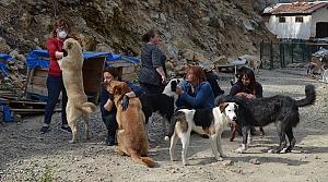 Artvin'de 14 gönüllüden engelli ve hasta köpeklere şefkat eli