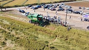 Bafra Ovası'nda çeltik hasadına başlandı