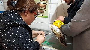 Balık ağına dolanarak yaralanan martı koruma altına alındı