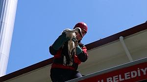 Cami kubbesindeki yaralı leyleği itfaiye kurtardı
