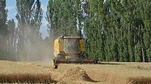 Çorum'da hasat bayramı düzenlendi