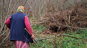 Fındık fiyatı, üreticileri bahçelerine yönlendirdi