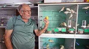 İsmail amca evini kanaryalarıyla paylaşıyor