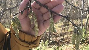 Mevsim normalleri üzerinde seyreden hava fındık üreticilerini endişelendiriyor