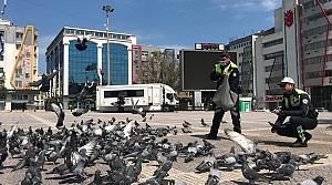 Samsun'da aç kalan kuşlara trafik polisleri yem verdi