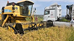 Sinop'ta çeltik hasadına başlandı