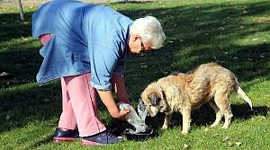 """Sokak köpekleri """"Filiz anne""""nin yolunu gözlüyor"""