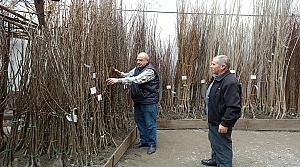 Tosya'da meyve fidanı satışları başladı