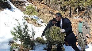 Tosya'da yabani hayvanlar için doğaya yem bırakıldı