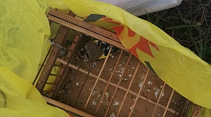 Zonguldak'ta saka kuşlarını yakalayan avcılara 3 bin 300 lira ceza