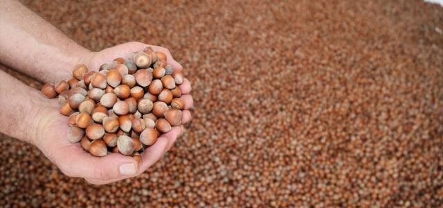 Türkiye'den 10 ayda 245 bin ton fındık ihraç edildi