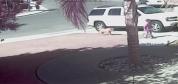 Kahraman kedi çocuğu köpekten kurtardı